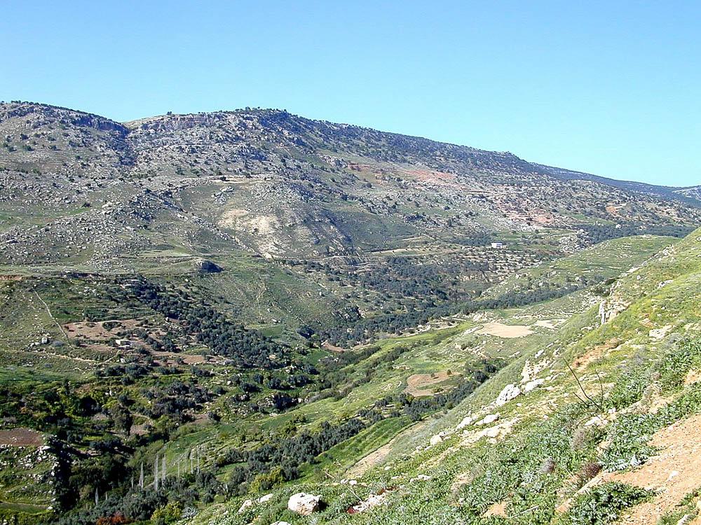 Forest of Ephraim